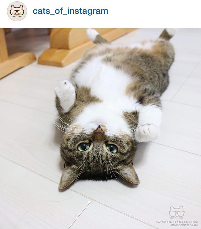 cats_of_instagram