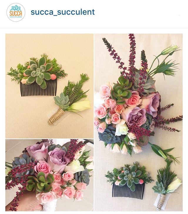 succa_succulent